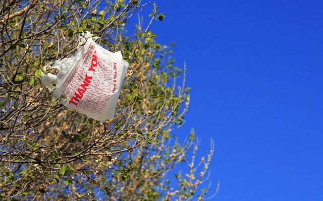 A plastic bag stuck in a tree.