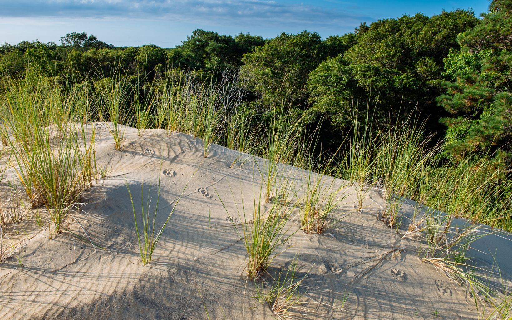 A sand dune at Nags Head Woods.
