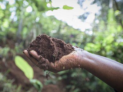 Una mano sostiene un montón de tierra ricah con un telón de fondo de bosque