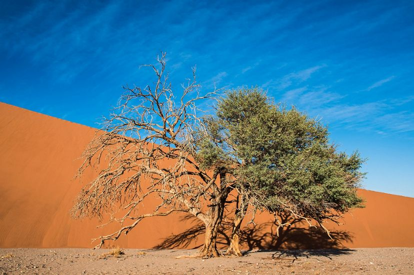 A tree fights to survive in the harsh desert of Sossusvlei, Namibia. This photo was entered into The Nature Conservancy's 2018 Photo Contest.