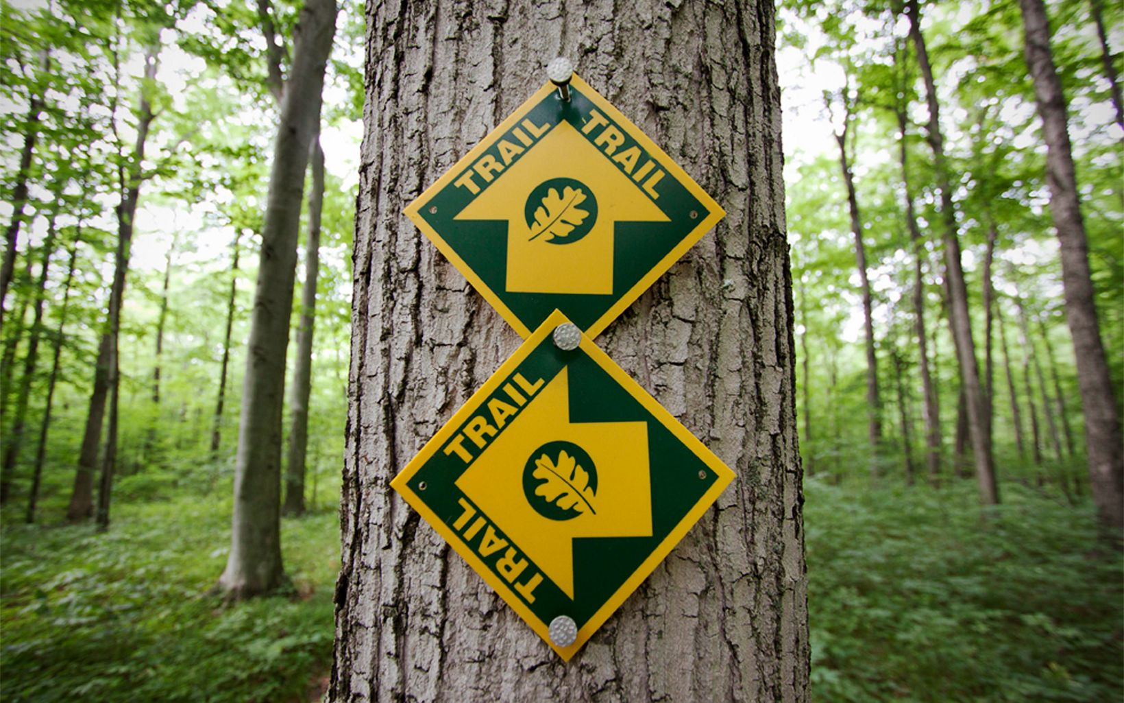 Two trail signs nailed to a tree.