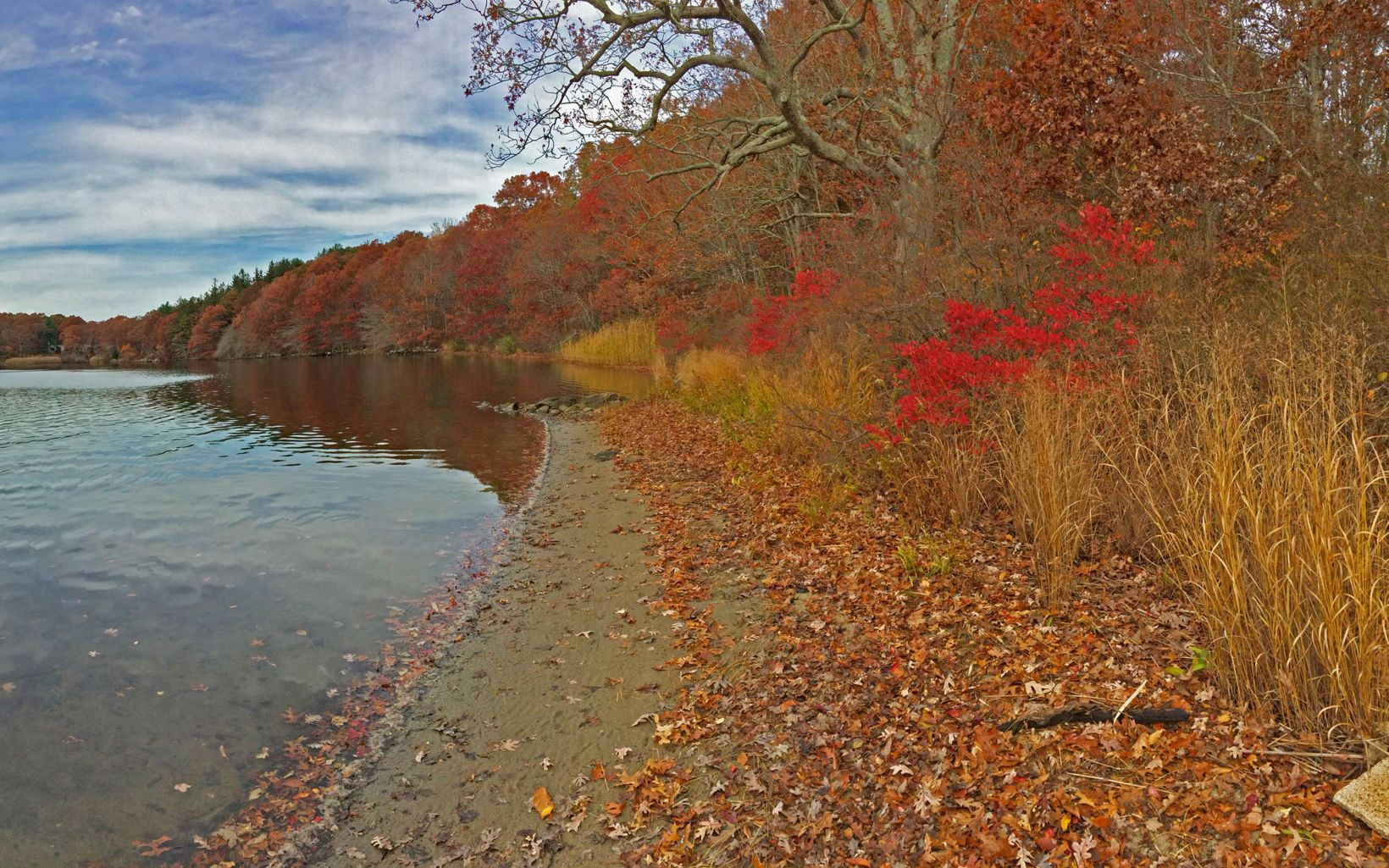 Standing on the shore of a coastal forest. Fall foliage turning red and gold contrasts with the calm surface of a tidal river.