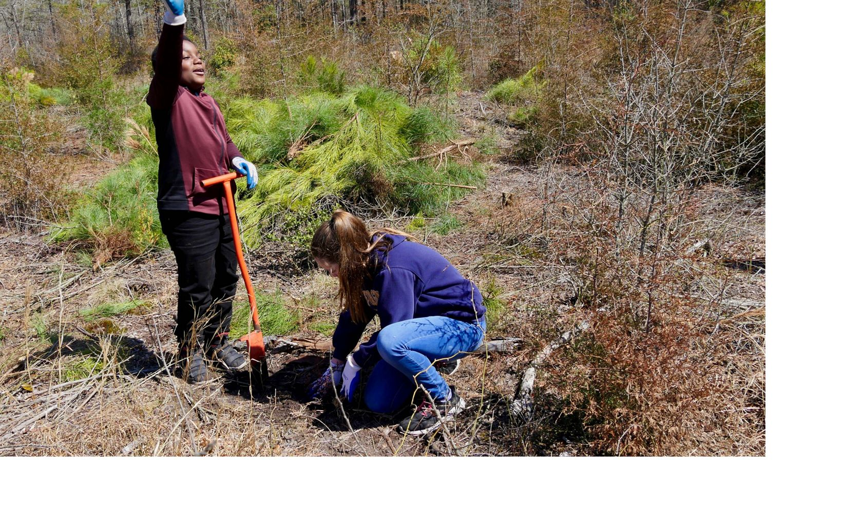 Middle school students planting seedling at Nassawango Creek Preserve.
