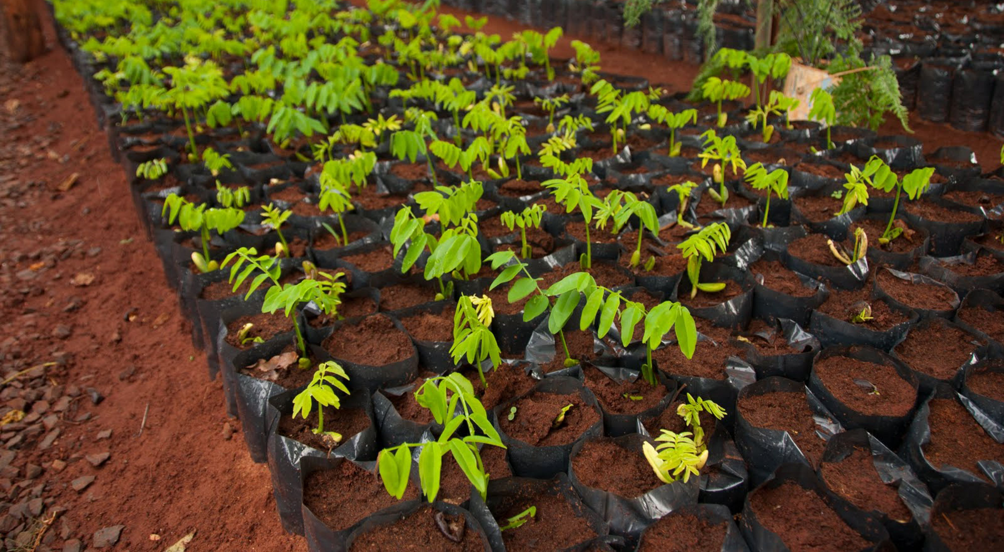The trees in this nursery were used by Dow for reforestation efforts near their Brazil facility.