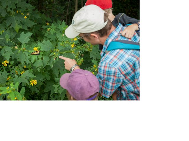 A man and his children look at a butterfly on a bush.
