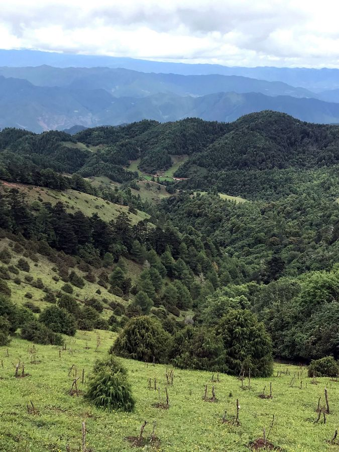 mountainous view with reforested area in foreground