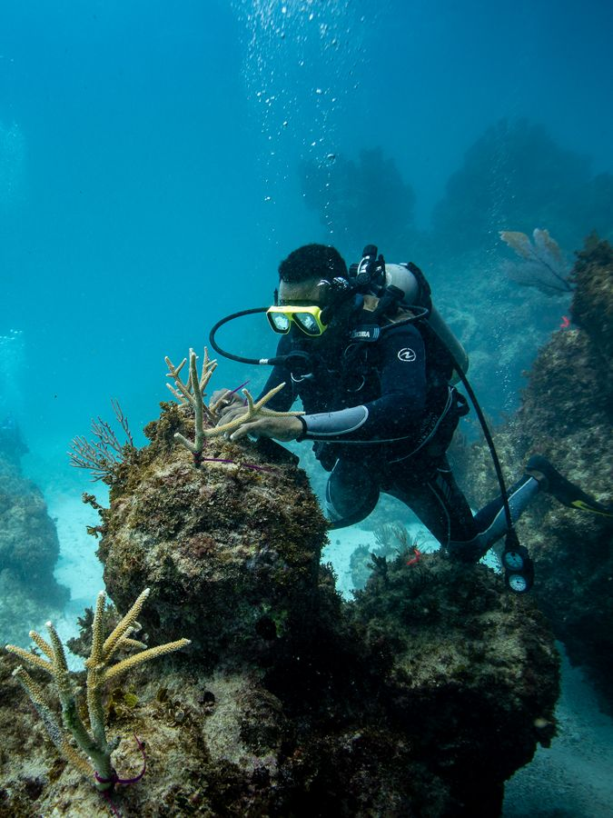 a scuba diver repairs a piece of coral underwater