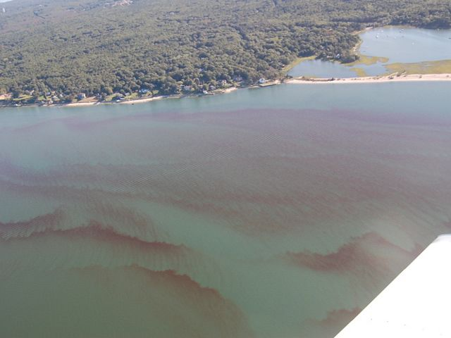 In Long Island, nitrogen pollution from outdated septic systems has resulted in algae blooms and rust tides.