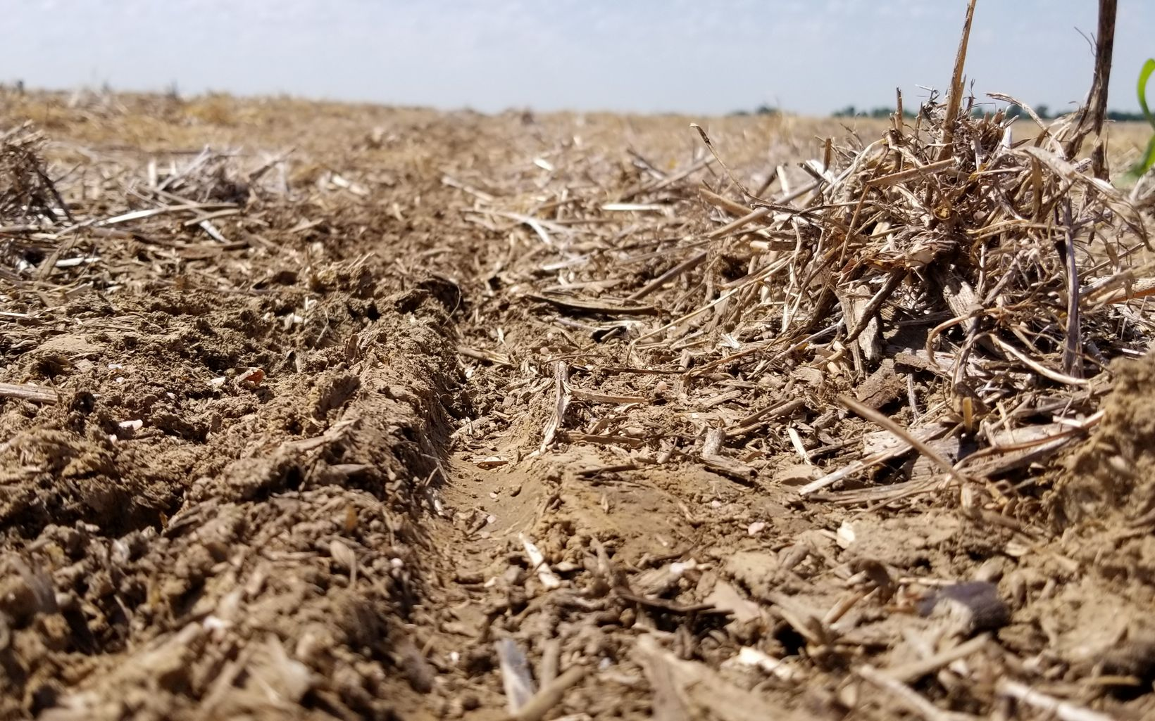 A field is planted using no-till farming.