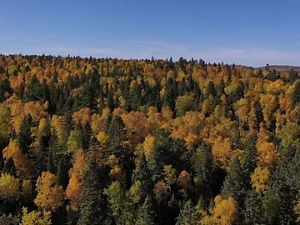 Changing colors in Minnesota's forests along Lake Superior.
