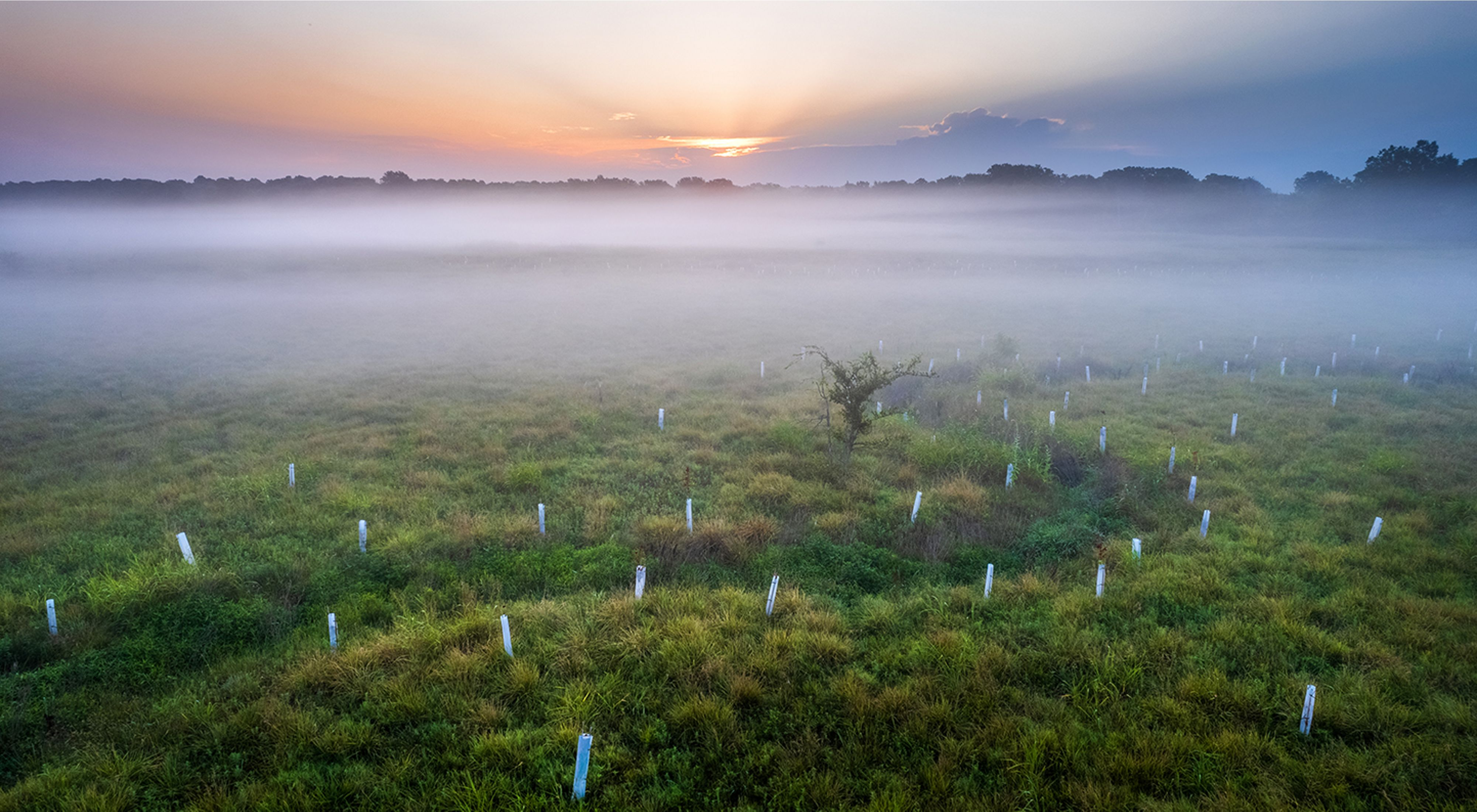 Early morning fog rising over a stream surrounded by newly planted trees.