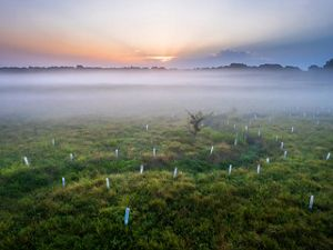 Early morning fog rising above a stream surround by newly planted trees.