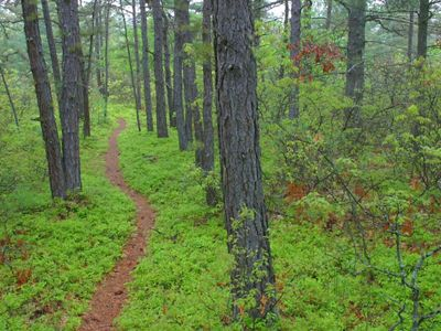 A path winds through lush green woods.