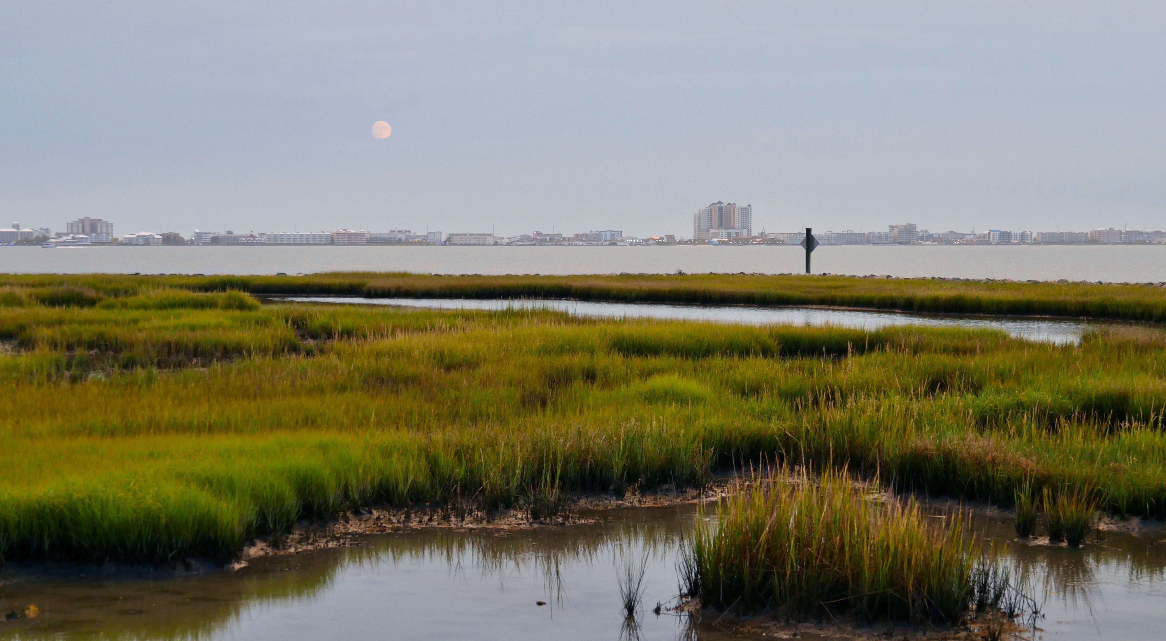 View of the Ocean City Maryland skyline. The buildings line the skyline in the distance across an open body of water. Green marshes cut by meandering channels of water are in the foreground.