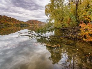Looking downstream of the calm waters of the Ohio River, trees lining the banks and overhanging the river with fall foliage.
