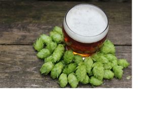 pint of beer surrounded by green hops on wooden table