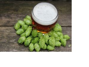 Looking down on a frothy glass of beer surrounded by green hops.