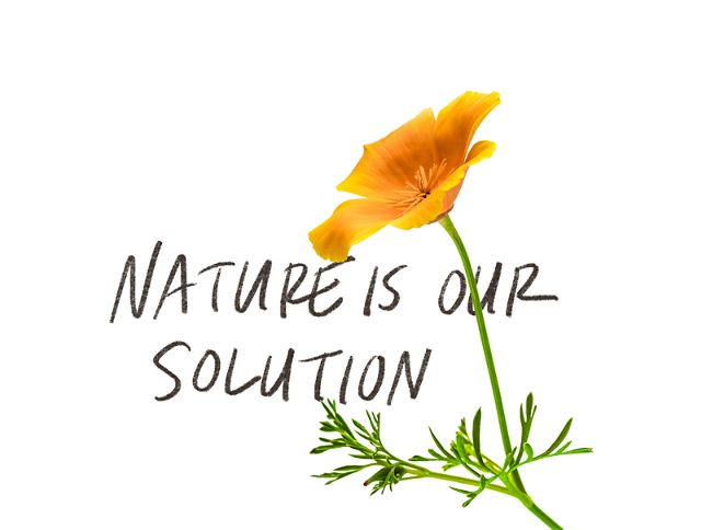 An illustration with a yellow flower and hand printed text reading 'nature is our solution.'