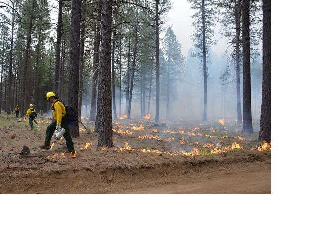 Carefully planned and managed, controlled fires improve forest health and reduce the risk of severe wildfire. Here, fire workers remove the underbrush and overgrowth of fuels.