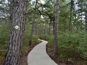An redesigned trail in the Ossipee Pine Barrens Preserve in Ossipee, NH provides access to nature to people of all abilities.