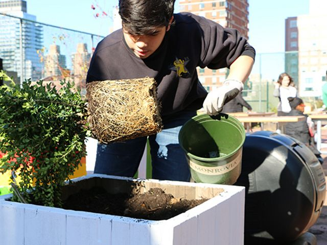Student building green roof in New York City