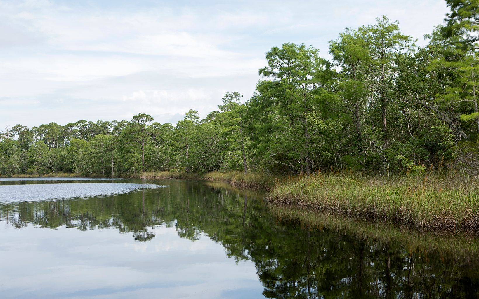 Tree-lined shoreline of Pensacola Bay, site of oyster reef restoration work.