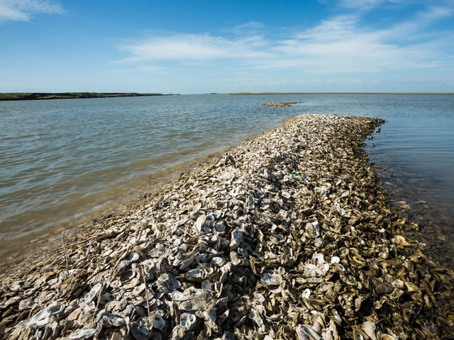 Oyster shells piled into an elongated spit reaching into the water.