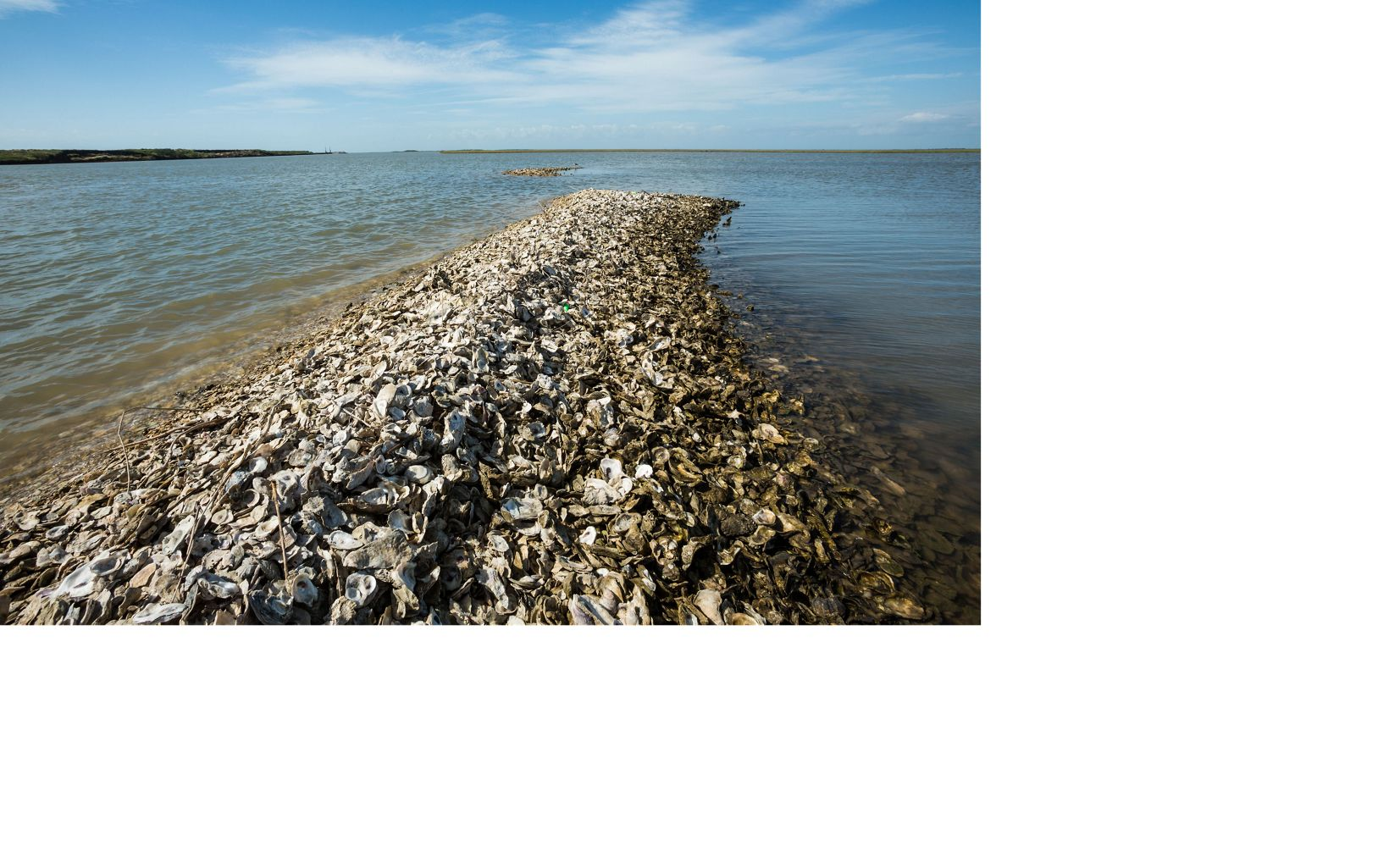 A row of oyster shells in the water.