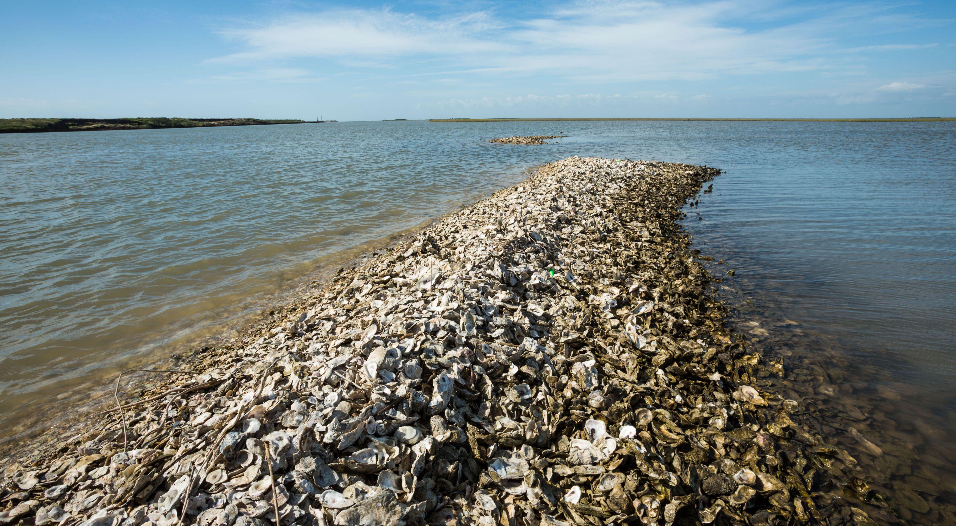 Oyster shells in Matagorda Bay, Texas.