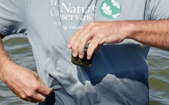 Virginia Coastal Scientist Bo Lusk holds a small jar containing thousands of eelgrass seeds.