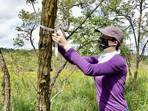 A woman wearing a purple shirt and black face mask ties a white ribbon marker around the trunk of a tree.