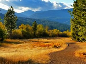 My dog and I love hiking around Mount Shasta. The Lake Siskiyou Trail is a 6.7-mile loop that's perfect for spring, summer, or fall.
