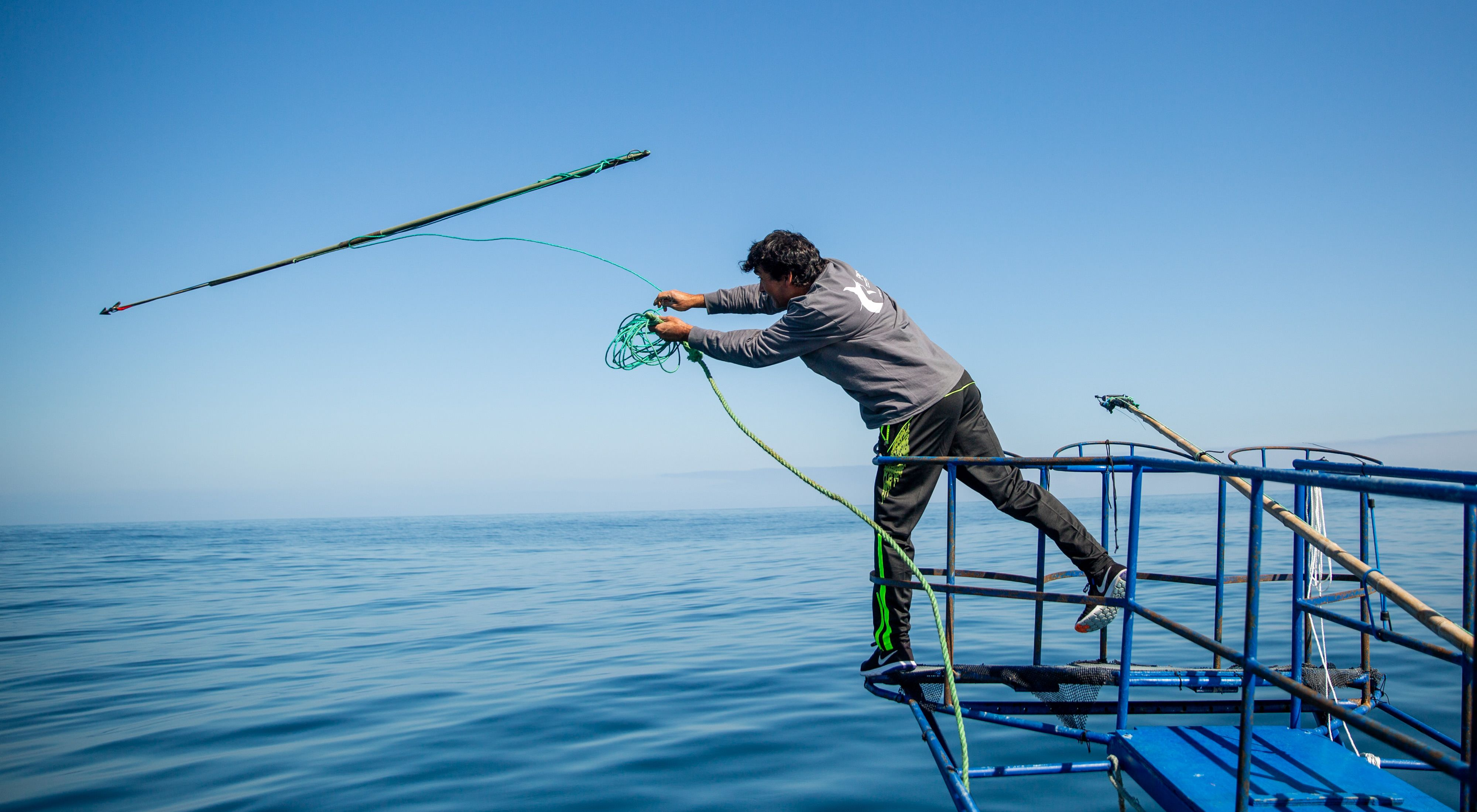 Swordfish tagging in Chile
