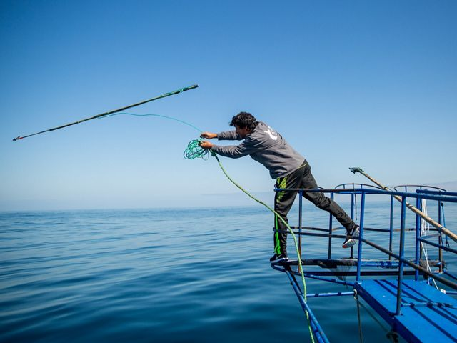 Swordfish tagging.