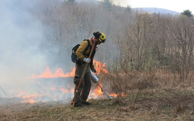 A man in yellow fire gear and a yellow helmet uses a drip torch to ignite a fire during a controlled burn. A line of fire burns behind him. A stand of trees in the background is obscured by smoke.