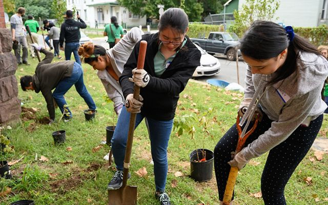 A group of people planting trees. Two women in the foreground use shovels to dig holes for the small potted saplings.