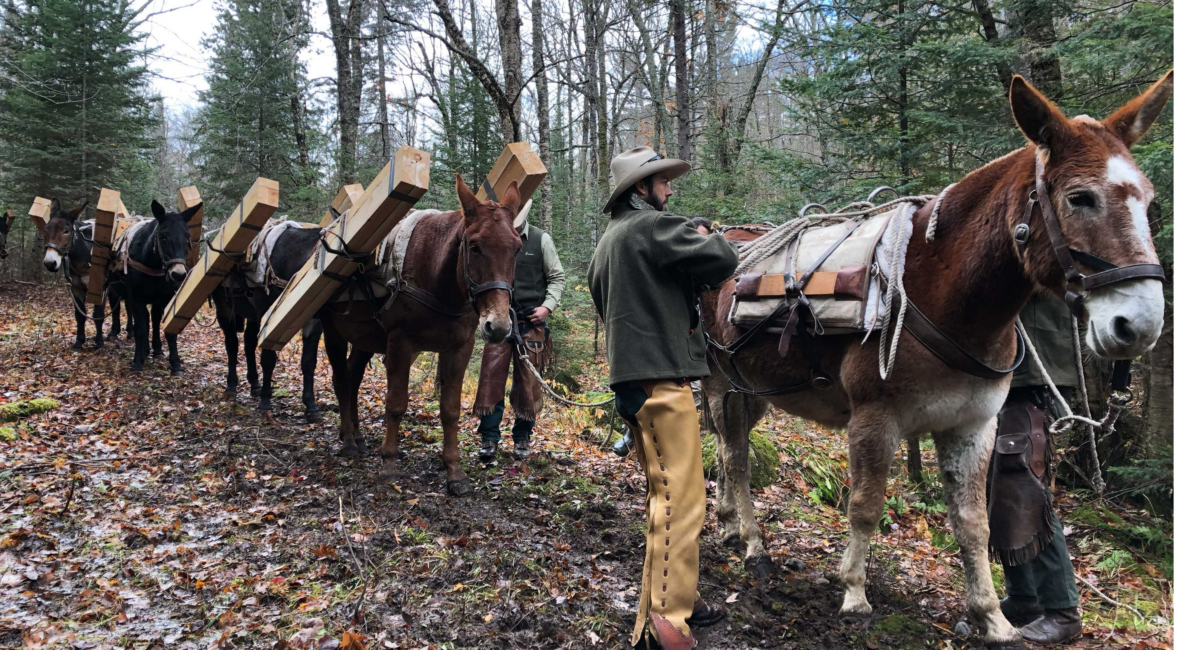 Two U..S. Forest Service pack-strings were utilized to assist with a boardwalk project in Michigan's remote McCormick Wilderness Area.