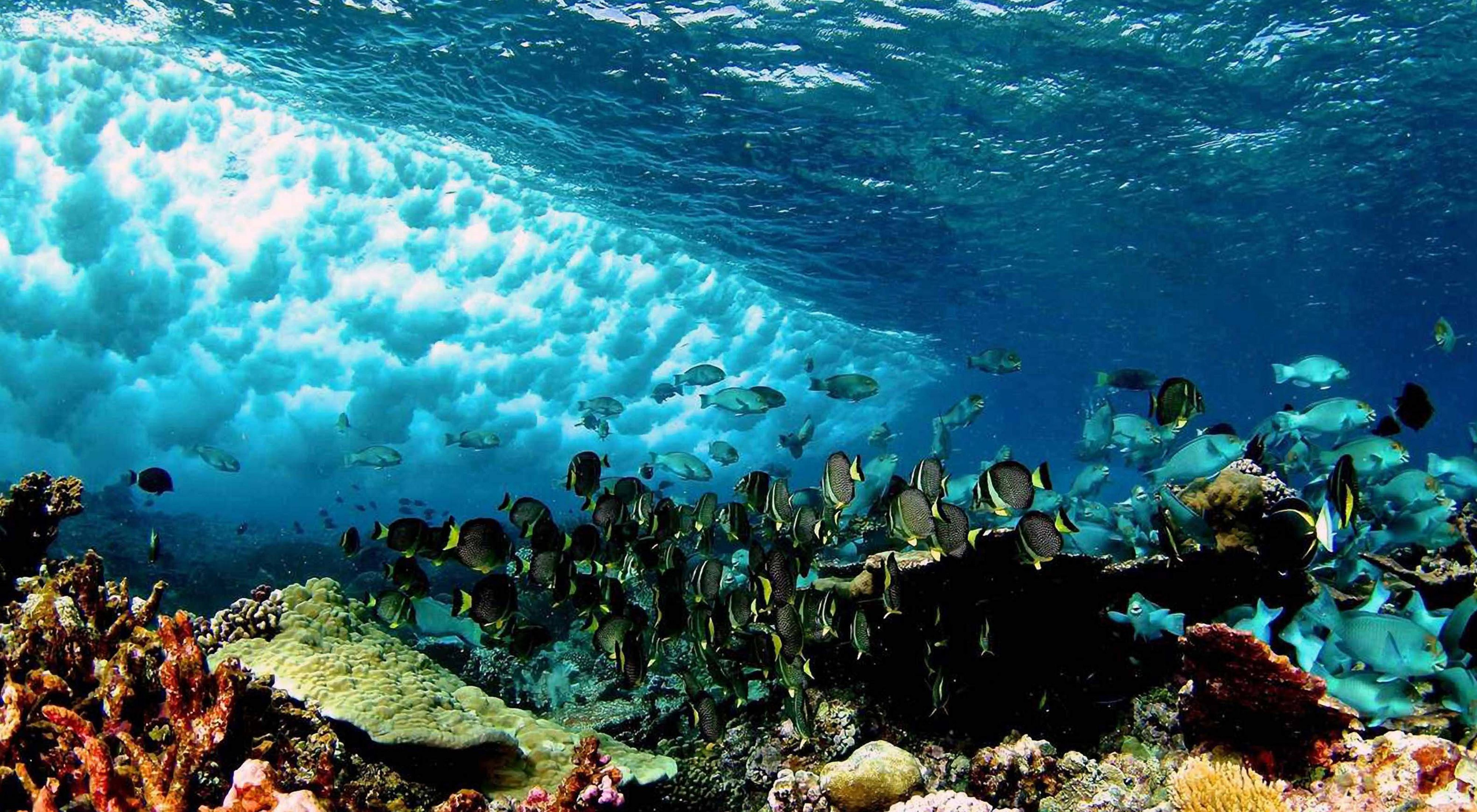 Coral reefs serve as natural sea walls, diminishing wave energy by up to 97%