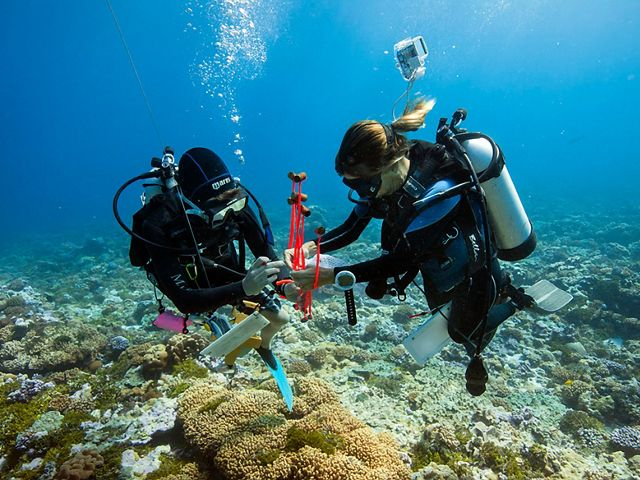 A marine monitoring and research team studies coral reefs and reef life at Palmyra Atoll.
