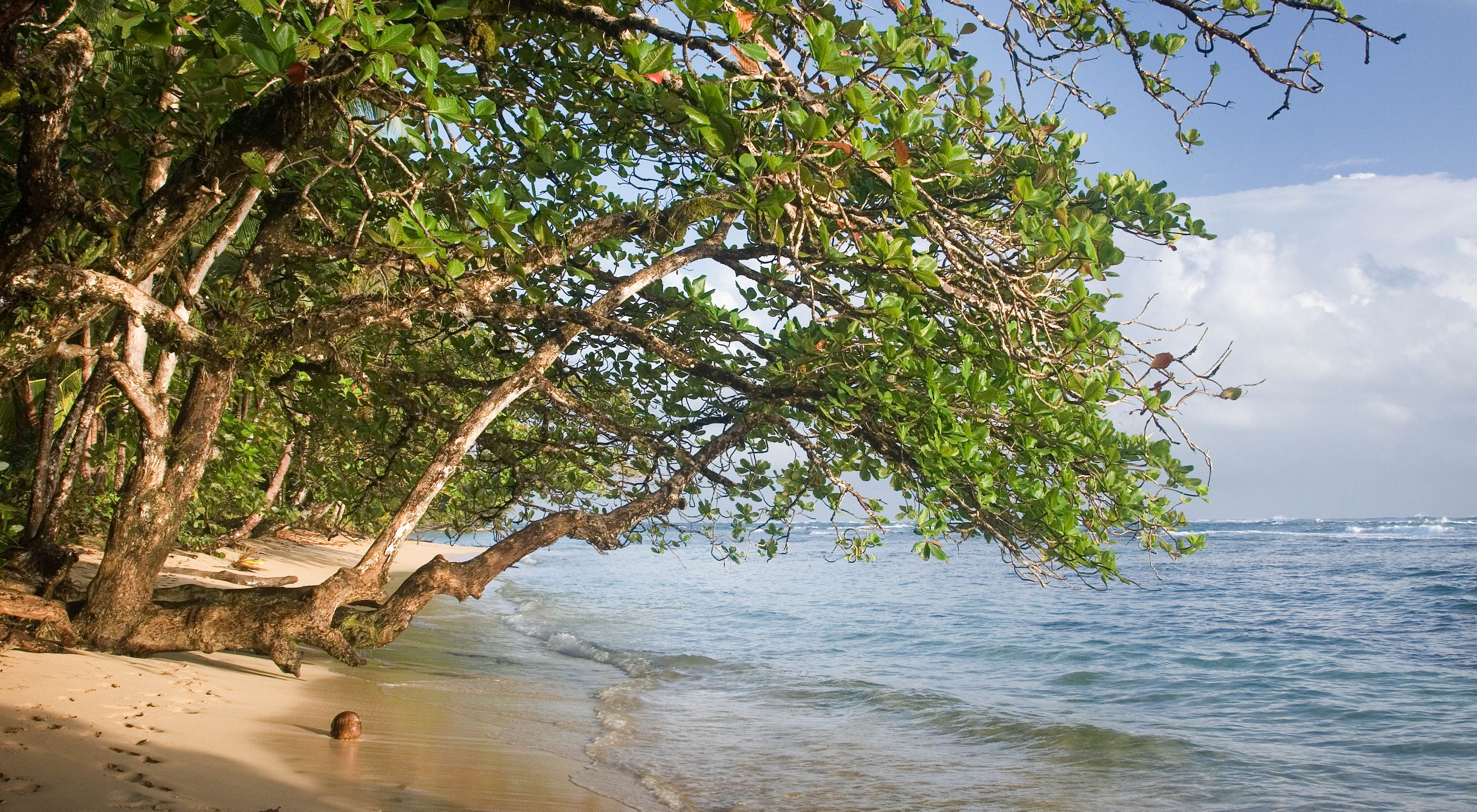 Mangrove trees overhang the water on Punta Vieja, the southeast tip of Bastimentos Island, Bocas del Toro, Panama. The area is home to four National Protected Areas as well as sea turtles, manatees, and some of the healthiest coral reefs in the Caribbean.
