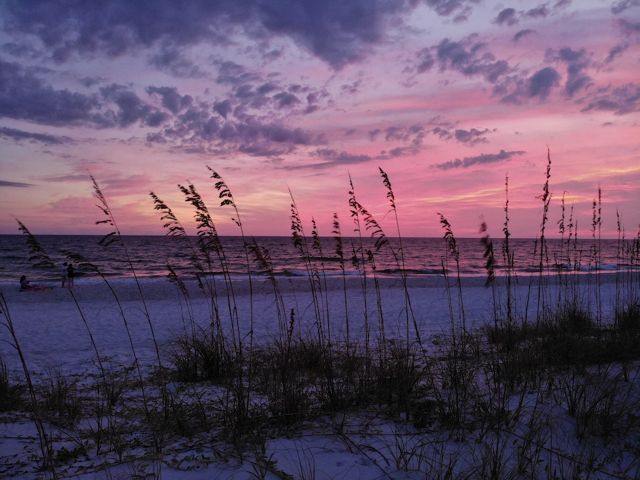 Ocean view through sea oats and dunes with pink skies at sunrise.