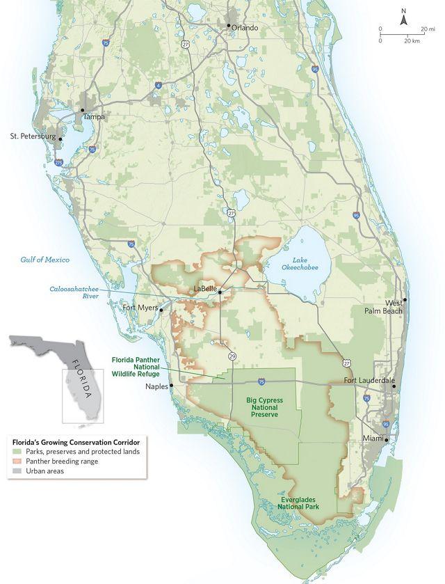 Mapa del sur de Florida con el rango de reproducción de la pantera
