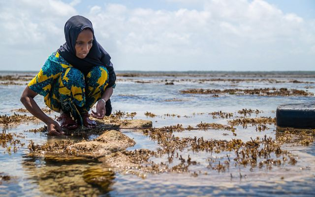 a woman kneels in shallow water, fishing for octopus, on a sunny day