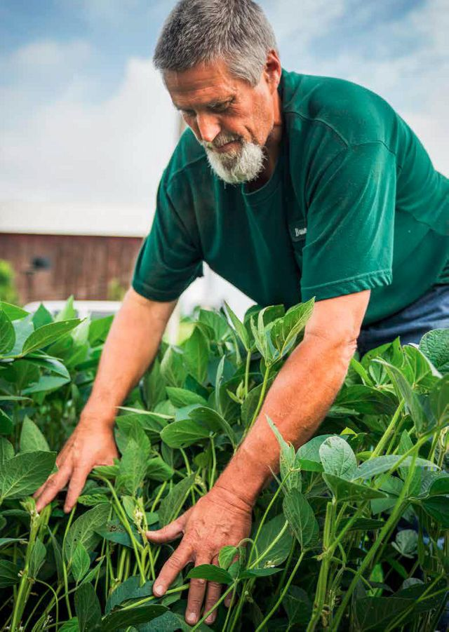 A man in a green shirt places hands in a row of farm crops.