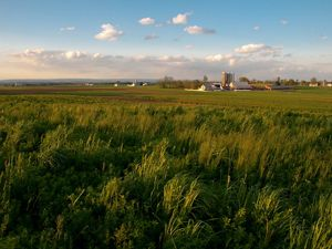 A farm and grain silos in the background are surrounded by open fields with with tall green grass in the foreground.