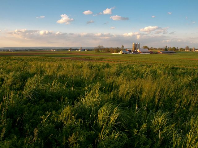 A farm is surrounded by a vast green field.