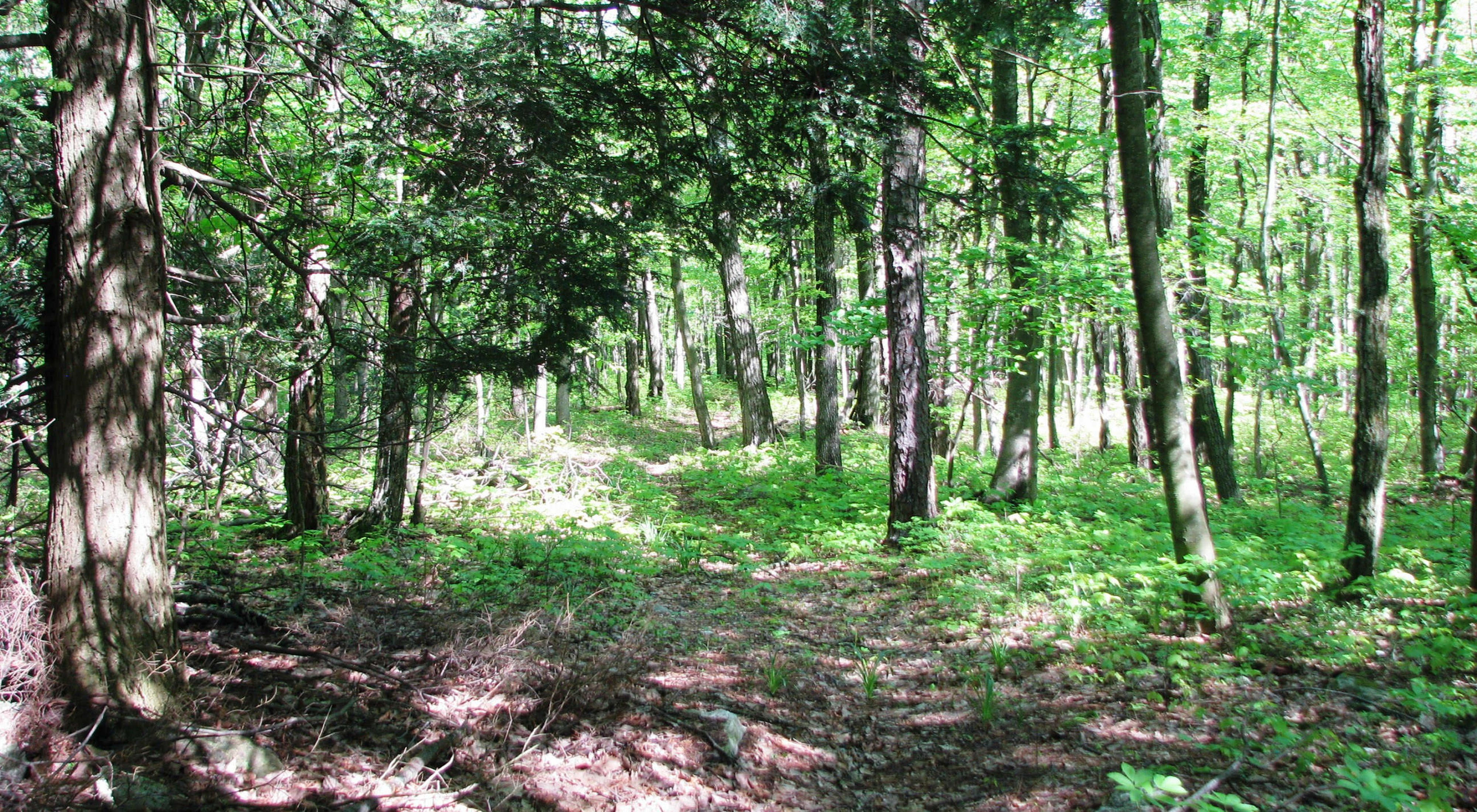 The Nature Conservancy permanently protected 127 acres along Pennsylvania's Kittatinny Ridge in June 2020.