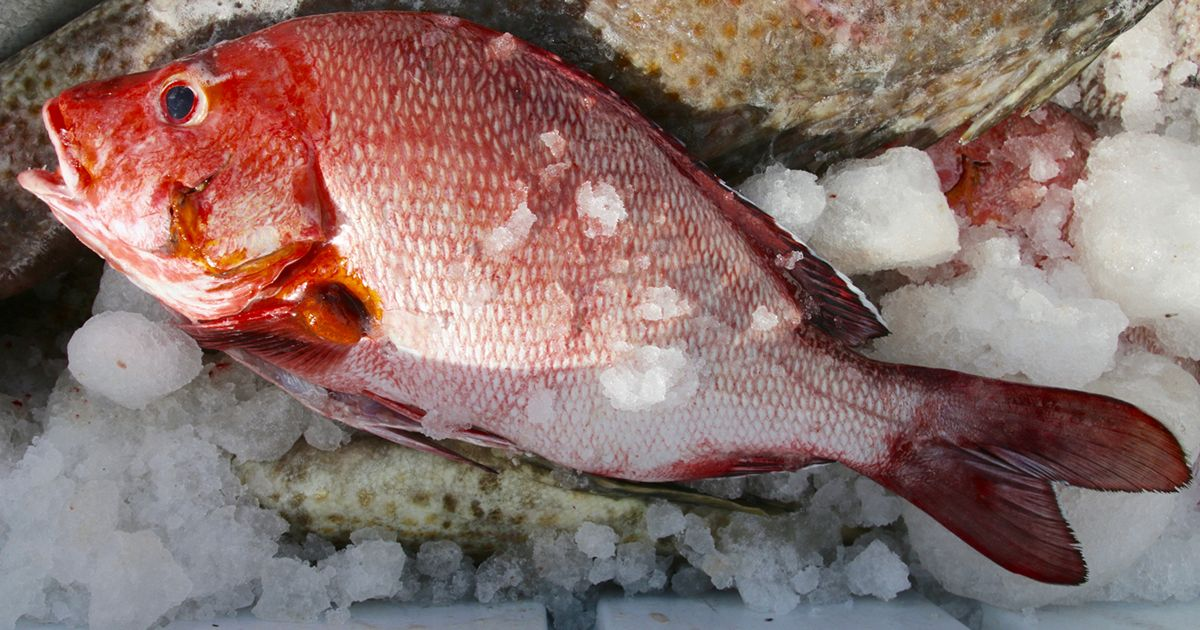 Kenya-Lamu-Fish-on-Ice_200x133