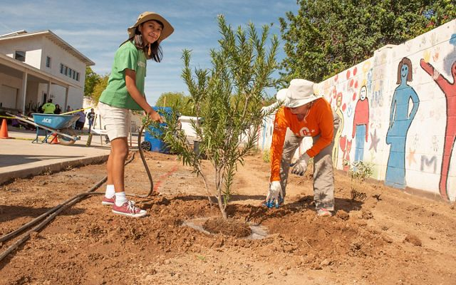 Volunteers plant trees to help lower temperatures in Phoenix.