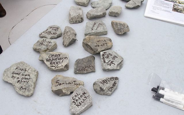 "Small rocks are spread out on a table. The rocks have messages written on them include, ""Oyster Restoration Rocks!""."